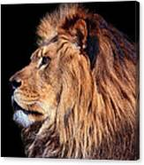King Of Beast Canvas Print