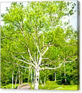 King Of The Birch Canvas Print