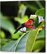King Of The Butterflies Canvas Print