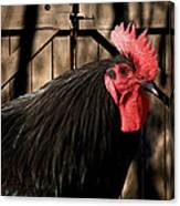 King Of The Coop Canvas Print