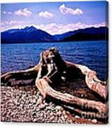King Of The Driftwood Canvas Print