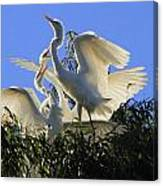 King Of The Roost Canvas Print