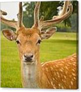 King Of The Spotted Deers Canvas Print