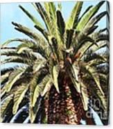 King Palm Canvas Print