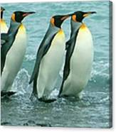 King Penguins Going To Sea Canvas Print
