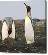 King Penguins With Chick And Egg Canvas Print