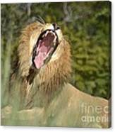 King Size Yawn Canvas Print