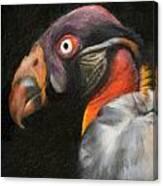 King Vulture - Impasto Canvas Print