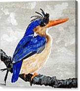 Kingfisher Canvas Print