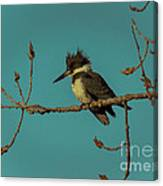Kingfisher On Limb Canvas Print