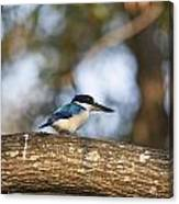 Kingfisher-top-end Australia Canvas Print