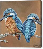 Kingfishers Canvas Print