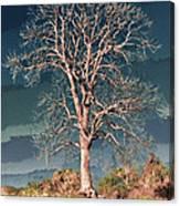 King's Tree Canvas Print