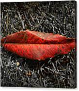 Kiss Of Leaf Canvas Print