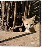 Kit Fox Pup Canvas Print