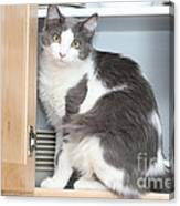 Kitchen Cubbard Cat Canvas Print