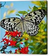 Kite Butterfly Canvas Print