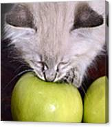 Kitten And An Apple Canvas Print