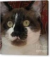 Kitten Black On Chocolate Silktapestrycatstm Canvas Print