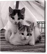 Kitten Cuddles Canvas Print