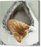 Kitten In An Igloo Canvas Print