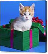 Kitten In Gift Box Canvas Print