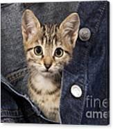 Kitten In Jean Jacket Canvas Print
