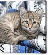 Kitten In The Blanket Canvas Print