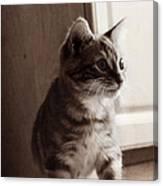 Kitten In The Light Canvas Print