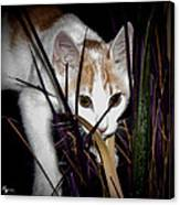 Kitten In The Plant Canvas Print
