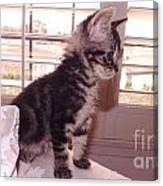 Kitten On Alert Canvas Print
