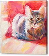 Kitten On Red Chair Canvas Print