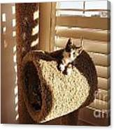 Kitten Peeks Through Hole In Condo Canvas Print