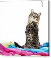 Kitten Playing With String Canvas Print