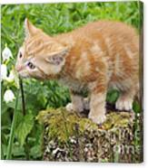 Kitten With Flowers Canvas Print