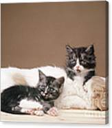 Kittens Lying With Puppy Canvas Print