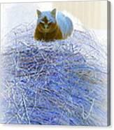 Kitty Blue IIi Canvas Print