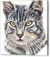 Kitty Kat Iphone Cases Smart Phones Cells And Mobile Cases Carole Spandau Cbs Art 337 Canvas Print