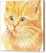 Kitty Kat Iphone Cases Smart Phones Cells And Mobile Cases Carole Spandau Cbs Art 339 Canvas Print