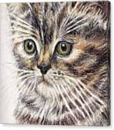 Kitty Kat Iphone Cases Smart Phones Cells And Mobile Cases Carole Spandau Cbs Art 343 Canvas Print