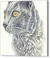 Kitty Kat Iphone Cases Smart Phones Cells And Mobile Cases Carole Spandau Cbs Art 347 Canvas Print