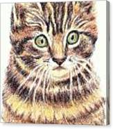 Kitty Kat Iphone Cases Smart Phones Cells And Mobile Cases Carole Spandau Cbs Art 350 Canvas Print