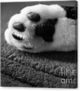 Kitty Paw Close Up Canvas Print