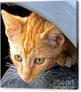 Kitty Under The Hood Canvas Print