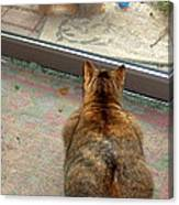 Kitty Watches The Squirrel Canvas Print