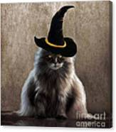 Kitty Witch Canvas Print