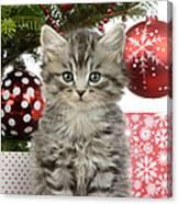 Kitty Xmas Present Canvas Print