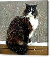Kittycat In The Snow On The Fence Canvas Print