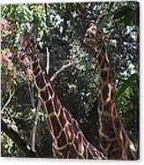 Knockin' Around The Zoo Canvas Print