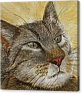 Knowing Look Of Wisdom Canvas Print